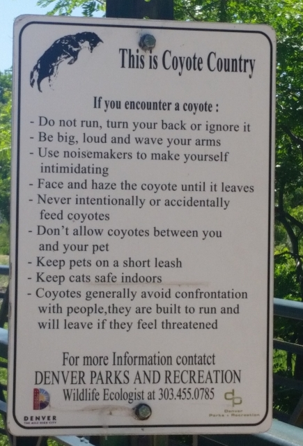 coyote sign